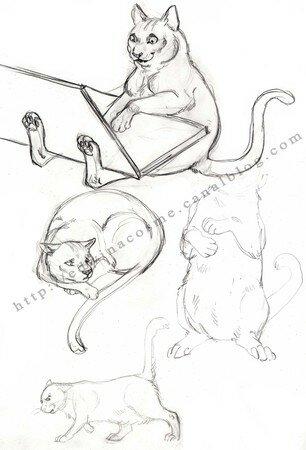 Illustratrice jeunesse et animalière 10545962_p