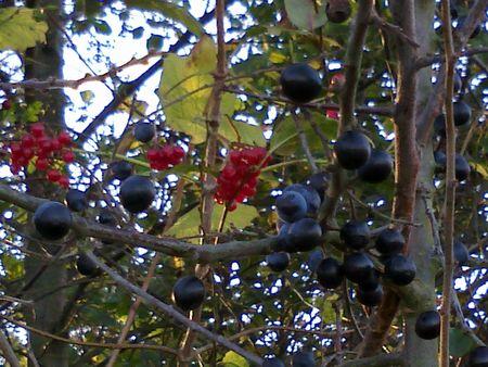 12_novembre_2010_rand_farm_park__8_
