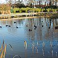 L'étang de la ville