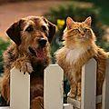 Les paramètres vitaux à connaitre pour votre chien et votre <b>chat</b>.