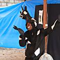 «La chèvre de Boubakar» présentée dans l'enceinte de la FAO