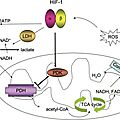 Melatonin inhibits the Migration of Colon Cancer RKO <b>cells</b> by Down-regulating MLCK Expression through Cross-talk with p38 MAPK