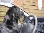 Chanel (Labrador noir) 36762376_p