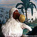 Dodu <b>Dodo</b> à la télévision