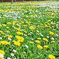 Nature, Fleurs