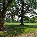 Faire son jogging dans Prospect Park