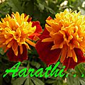 French Marigold Tiger Eyes