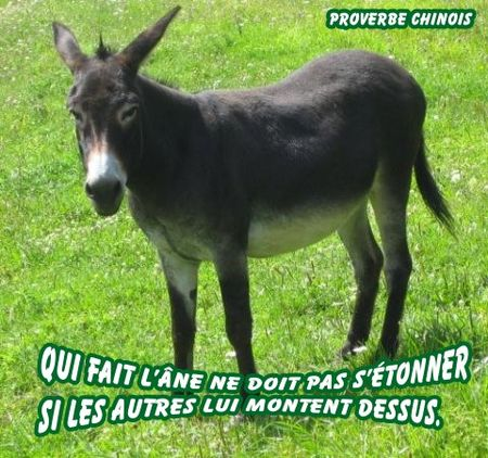 dans Citations, proverbes... 27830401_p