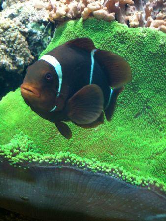 aquarium avril 2012 238