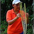 Costa Rica 7 - <b>Coeurs</b> de palmiers