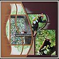 Pairi Daiza 2014 - Pandas roux