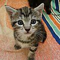 <b>chatons</b> 1 mois