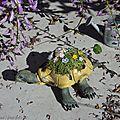 Une tortue Féerique