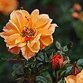 Floralbum.com blog
