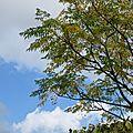 Un pseudo automne ou il ne pleut plus...