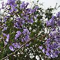 <b>Fleurs</b> <b>bleues</b>