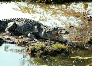 Kakadu-National-Park-Northern-Territory