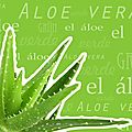 Aloe Vera & Co.