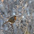 Grand week-end de comptage national des <b>oiseaux</b> des jardins
