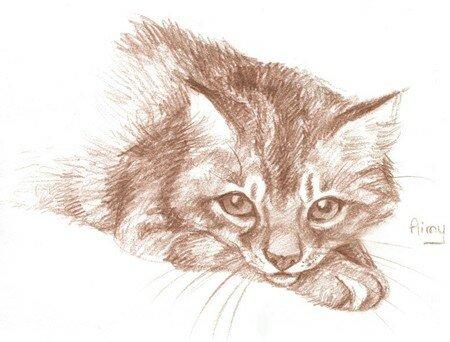 Illustratrice jeunesse et animalière 13403528_p