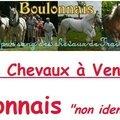 Boulonnais non identifiables A Vendre