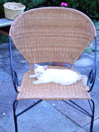 fauteuil_emmaus