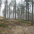 Ecault: La forêt détournée