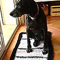 Le tapis en trapilho de la canine...