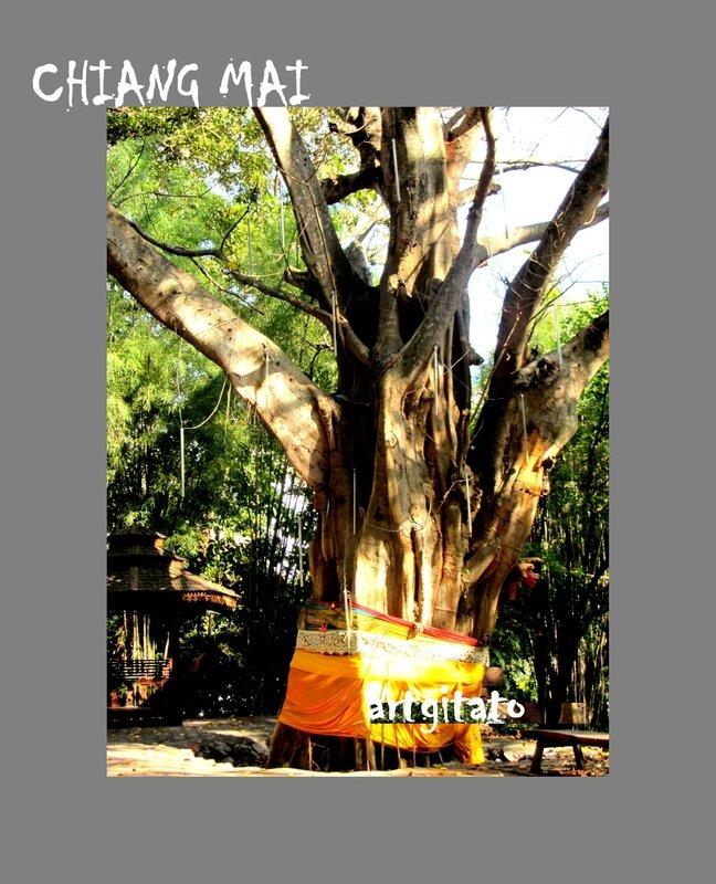 Chiang Mai Artgitato Thailande Thailand 21