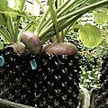 Jardin au vermicompost