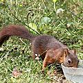Un écureui