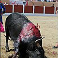 #Tourists, avoid cities where bullfighting is present, #stopbullfighting #tourism