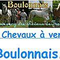 Liste de Chevaux ARABOBOULONNAIS <b>à</b> <b>Vendre</b>