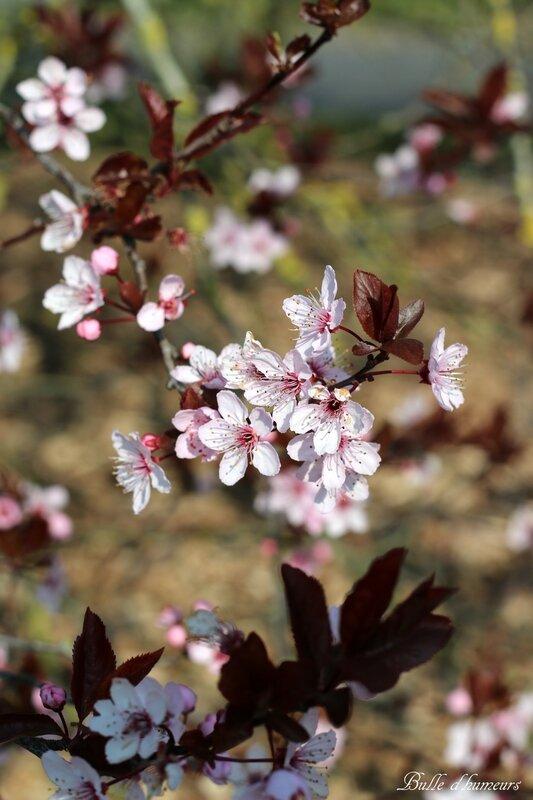#10 (mars 2016) le printemps (7)