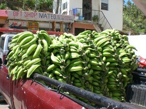137___Jour_5___journee_a_samana___march__de_samana___bananas