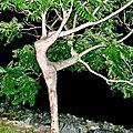 <b>Dame</b> <b>Nature</b>, avec M-Odile : JANVIER