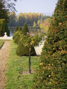 Jardin___la_fran_aise_de_La_Motte_Tilly