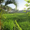 Bali-pays-des-dieux-et-des-démons