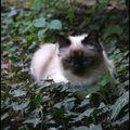 Par le chat de l'aiguille