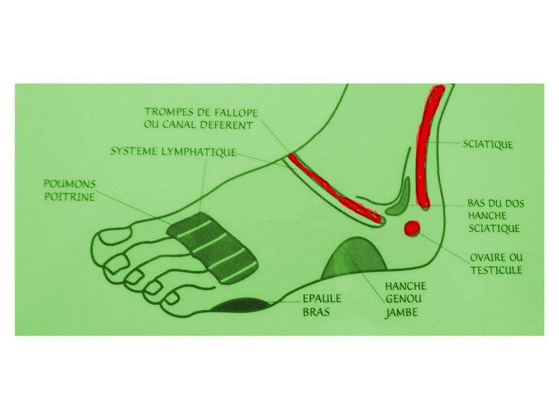 Boosting Your Fertility With Reflexology Conceptionfaq