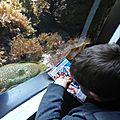 Le corail à l'<b>Aquarium</b> de Paris