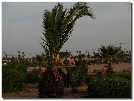 marrakech__446_