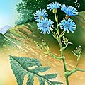 Flore des Pyrénées