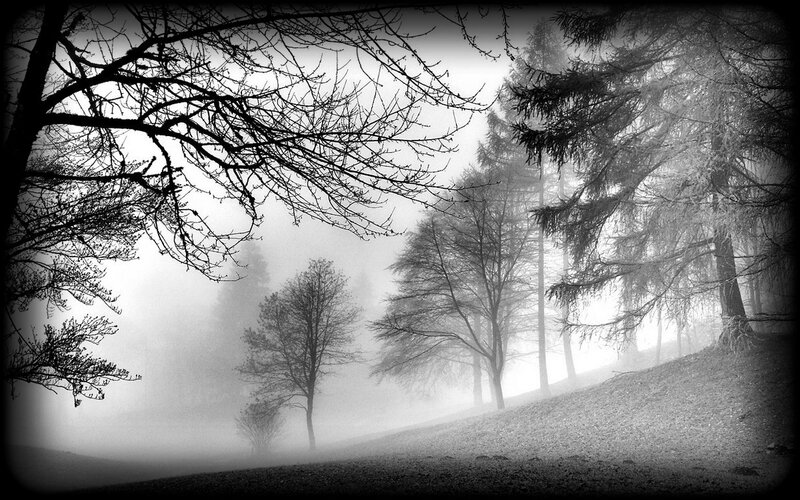 Cold_forest