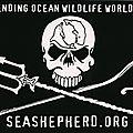 Sea Shepherd: L'association (incorruptible) de défense des océans