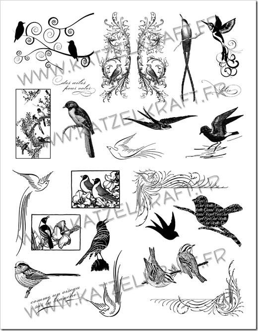 KTZ41 oiseaux