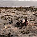 LIENS // DEREGLEMENT CLIMATIQUES MAJEURS !...