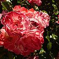 <b>Bouquet</b> du we