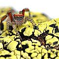 Jolie rousse, yeux verts (huit), arachnophobe s'abstenir!