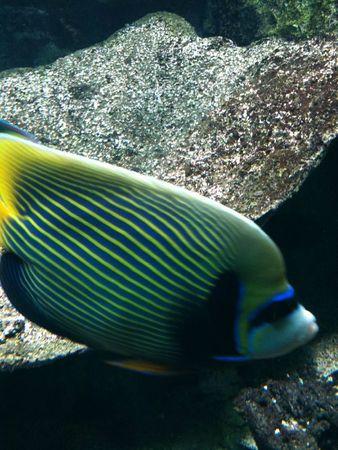 aquarium avril 2012 232